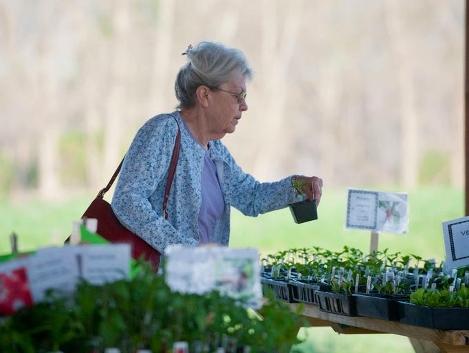 Jean Thomson looks for heirloom tomatoes at the Riverside Plant & Herb Sale at the Farnsley-Moreman Landing. Proceeds of the sale support the historic site.  12 April 2013