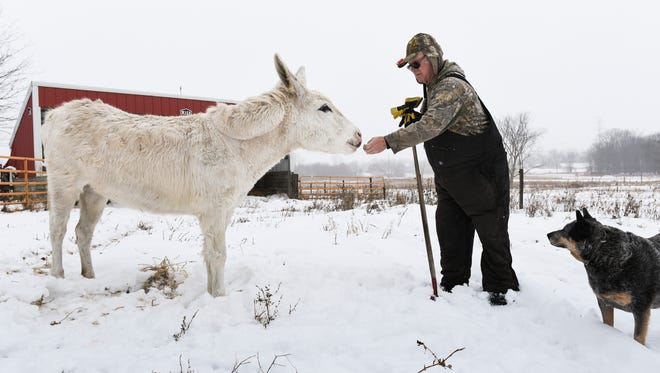 """""""I've had animals all my life; we understand each other,"""" Darrell Schultz of Charlotte said Wednesday, Jan. 10, 2018, while feeding his donkey Darlin' in the field near his farm near the corner of Packard Highway and Stewart Road."""