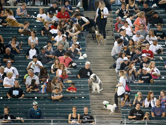 Baseball fans who brought their dogs for the Chicago White Sox's annual Bark At The Park get seated in the left field bleachers before a baseball game between the White Sox and the Cleveland Indians Tuesday, Sept. 13, 2016, in Chicago. The White Sox were the first major-league organization to create a dog-friendly day at the ballpark in 1996. (AP Photo/Charles Rex Arbogast)