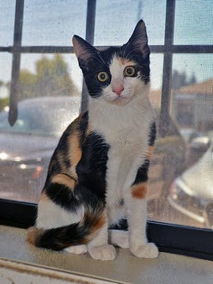 Tilley is a sassy and independent kitty who still likes to show love to her human companions.