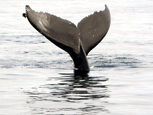 whaleweek.jpg