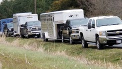 Trailers from waiting to carry brood mares to an undisclosed