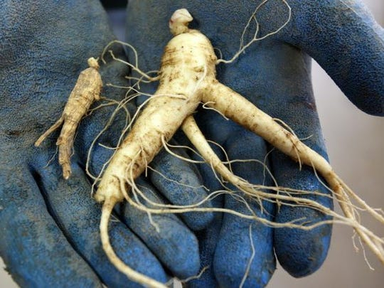 Ginseng is a major export from Wisconsin, particularly