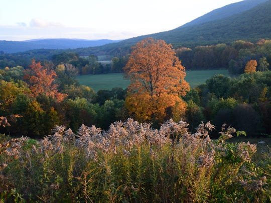 Who needs Vermont when the height of fall foliage season is just coming into its own in our region. An array of golds, yellows, oranges and reds can already be glimpsed from most local highways and even in your own back yard.