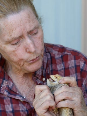 Sherrie Dolezal demonstrates how she blew into the mouth of a bearded dragon which she resuscitated using CPR in a photograph taken on Wednesday, Aug. 6, 2014. Dolezal operates a bearded dragon rescue out of her East Salem home.