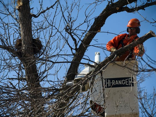 Gary Graff removes broken tree limbs April 16, 2013. Crews spent weeks and months cleaning up fallen branches and trees from the ice storm.