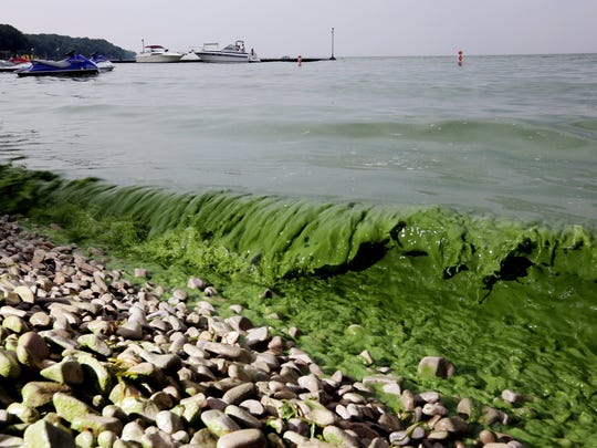 Algae washes ashore off  South Bass Island State Park,