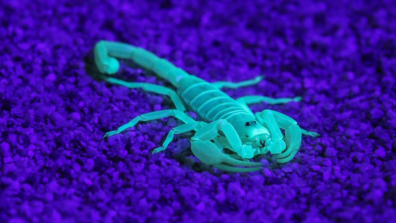 Scorpion hike near Palm Springs