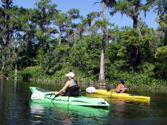Enjoy the scenic lush green landscape along the slow moving Wakulla River as you listen to the morning bird calls. Take in the river wildlife including turtles and an occasional alligator lying on submerged logs as Bald Cypress trees border the waterway, paddlers and boaters cruise by. Watch for Ospreys and Bald Eagles but be on the look out for manatees as they swim by in stealth mode.