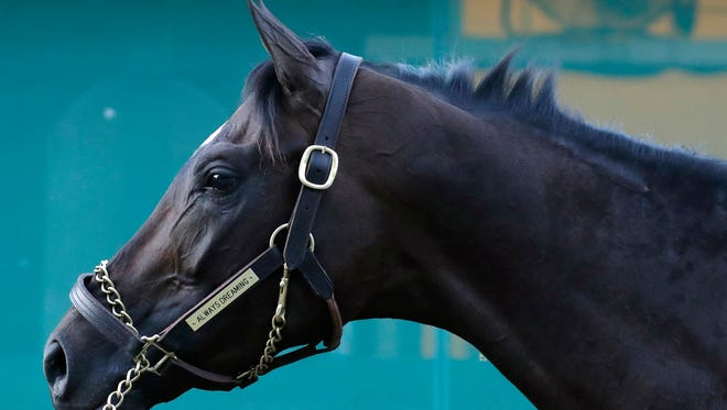 Kentucky Derby winner Always Dreaming stands outside a barn as he is washed after a workout at Pimlico Race Course in Baltimore, Thursday, May 18, 2017. The Preakness Stakes horse race is scheduled to take place May 20. (AP Photo/Patrick Semansky)