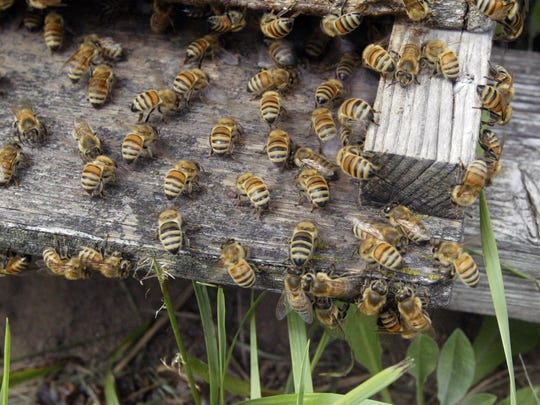 Kurt Petersen said he has seen a decline in his bees' honey production.