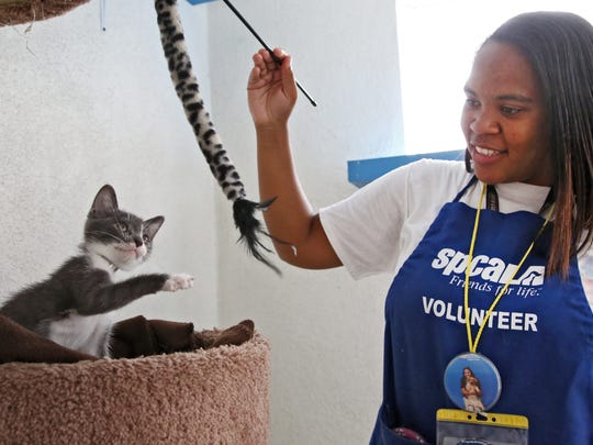 """Jourdan Giron of Lawndale, Calif., a shelter volunteer at the Los Angeles SPCA adoption center, plays with a kitten at the center. Giron, who turns 21 this month, is new to the volunteer corps. She signed up in February for eight hours a month, said services manager Elise Thompson. But she's put in more than 325 volunteer hours _ well over the 64 promised. """"I'm just happy being here and I don't want to leave,"""" Giron said."""