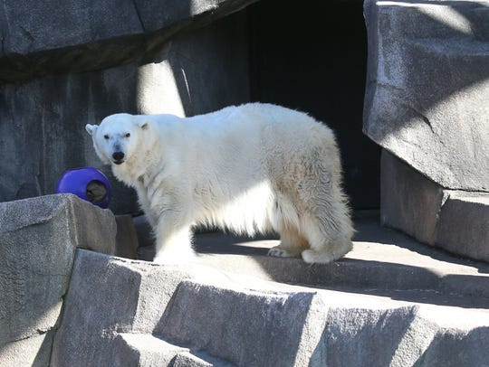 You can see animals such as Snow Lilly during the Milwaukee County Zoo's Frosty Free Week from Dec. 24-Jan. 1.