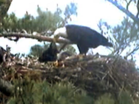 AP Wildlife Webcams