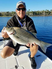 Dave Robb Jr., the 2017 Florida Sport Fishing Association (FSFA) Overall Club Champion, landed this hybrid Sunshine Bass on the St. Johns River. Robb, a native of Eustis, spent years fishing on the St. Johns and Central Florida lakes. It is Robb's second consecutive year as champion for the 225-member Cape Canaveral sport fishing club.