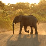 10 Reasons to Visit South Africa Now
