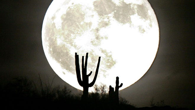 Saquaro cacti are silhouetted by a full moon rising over South Mountain on June 30, 2007, in Phoenix.