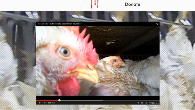 Undercover video shows how chickens are slaughtered for market.