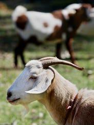 Annual Farm Tour includes 25 various locations around