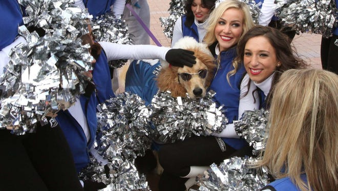 The Detroit Pride cheerleaders go crazy over Billy Palmer, a golden retriever in front of Comerica Park before a Detroit Lions game Nov. 24, 2013.