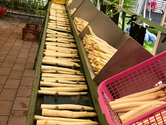#4 White asparagus is washed and sorted at Frischer