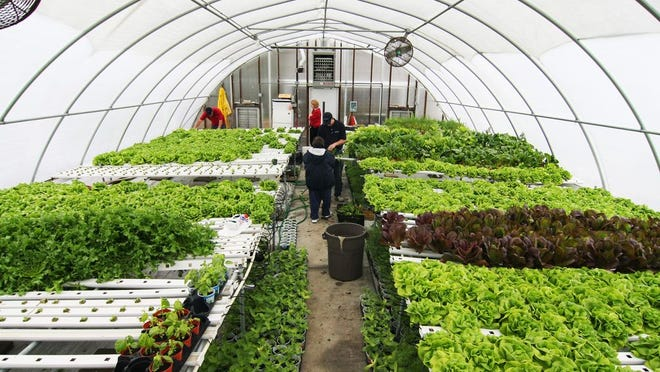 Employees tend to the greenhouse at Cape Abilities in Dennis as they plant and harvest vegetables in this 2008 photo. Cape Cod Times file