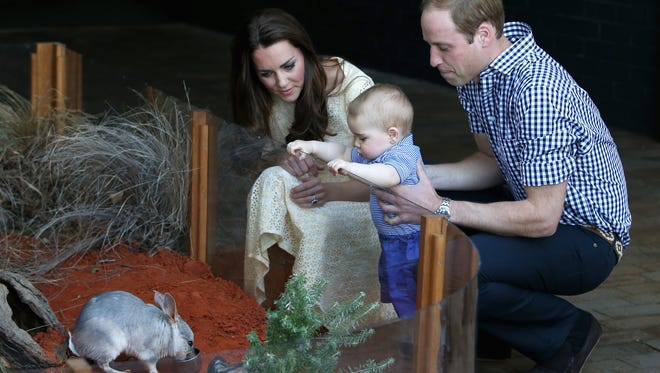 Prince George meets his namesake bilby as his parents look on at Sydney's Taronga Zoo on Easter Sunday. The new bilby exhibit has been named for the royal baby.