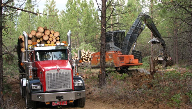 A forest thinning operation on the Deschutes National Forest.
