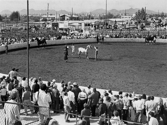 Judges look over entries in the All-Arabian Horse Show, Feb. 15, 1986. Exhibitors have entered 1,493 animals. The horses came to Paradise Park, 6200 E. Bell Road, from the United States, Canada, Australia, the Netherlands, Brazil and Belgium.