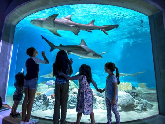 OdySea Aquarium starts its month of special shark programming