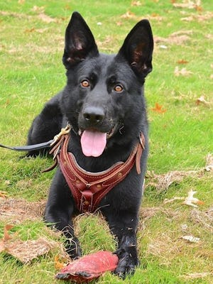 New Castle County Police K-9 Officer Ax