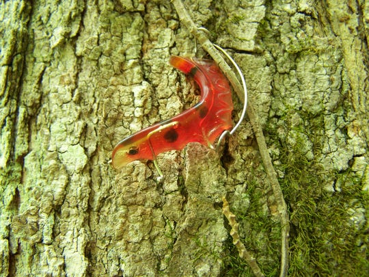 Lynn Faust discovered this dental retainer growing into a tree on the Sugarlands Valley Trail in Great Smoky Mountains National Park.