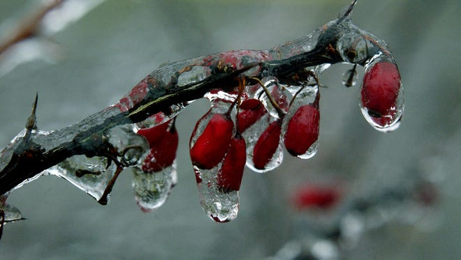 In this file photo taken Jan. 5, 2004, a barberry branch along Annandale Road near Bard College is coated in ice after freezing rain fell across the area.