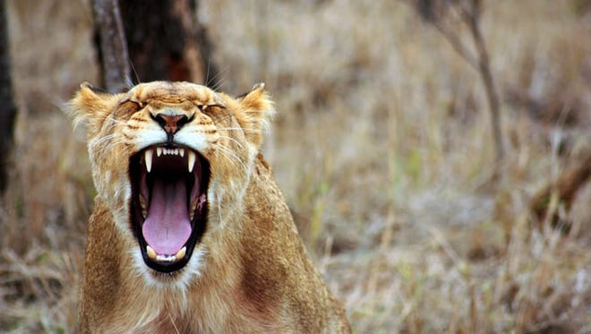 Anger is not an action, it is a wake up call. It's time to look straight into the eyes of the beast within and make her work for you.