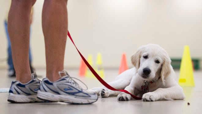 Train your best friend with the help of Harper, a new digital dog training app.