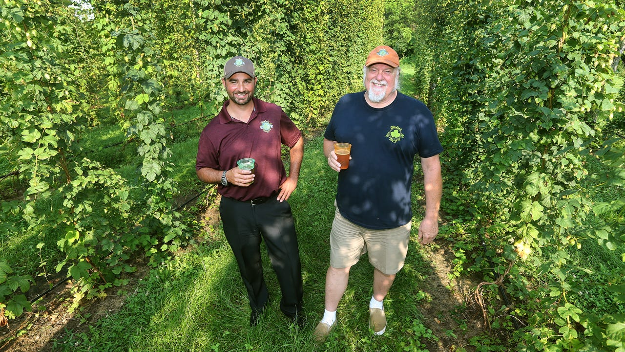 Ontario County hopyard feeds into craft beer growth