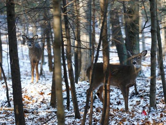 Deer inside the Binghamton University Nature Preserve