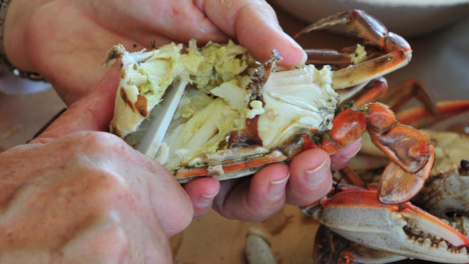 You should clean out the junk from the inside and then cut the mouth off, according to Fern Griffith. Then you should clean out the front of the crab.