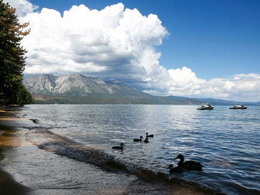 A family of ducks swims along the shore of South Lake Tahoe.