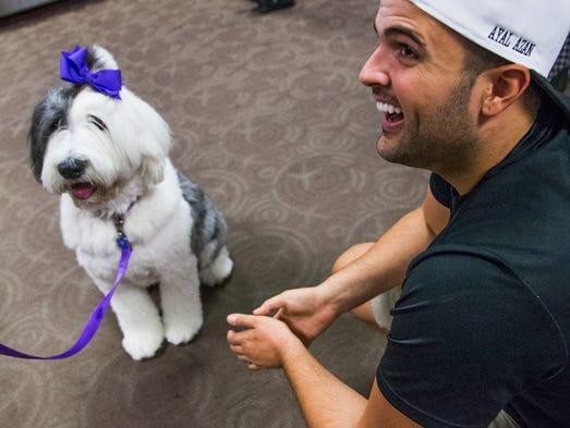 American United Ban Pets Cargo In Summer In Phoenix Las Vegas