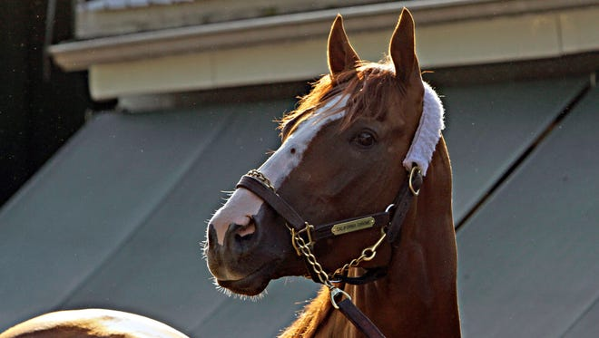 Kentucky Derby and Preakness Stakes winner California Chrome poses for the cameras outside the stakes barn at Pimlico Race Course in Baltimore, Sunday, May 18, 2014. Trainer Art Sherman says California Chrome might not pursue a Triple Crown bid in the Belmont Stakes if New York officials won't allow the colt to wear a nasal strip. (AP Photo/Garry Jones)
