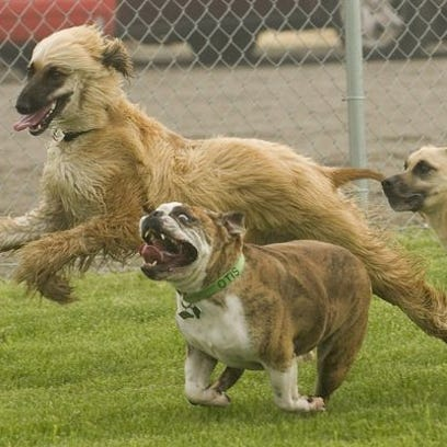 Dogs run at dog park in Canton earlier this year. Soon,