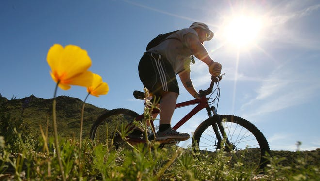 A mountain biker travels along a path lined with poppies at the Dreamy Draw Recreation Area on March 10, 2017, in Phoenix. Temperatures in the Phoenix area could hit 90 degrees Sunday, the first time this year, according to the National Weather Service.