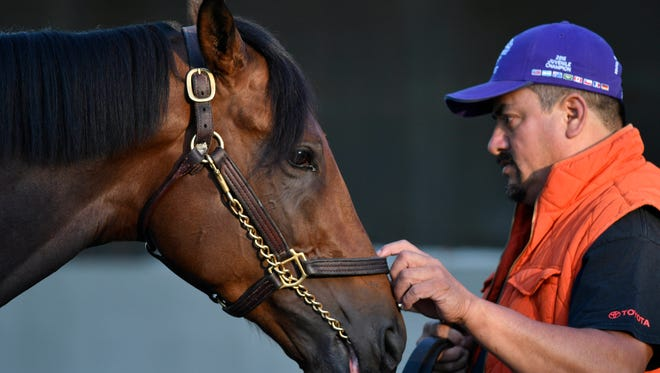 Groom Fernel Serrano holds Kentucky Derby hopeful Nyquist while he gets a bath during workouts in advance of the 2016 Kentucky Derby at Churchill Downs.