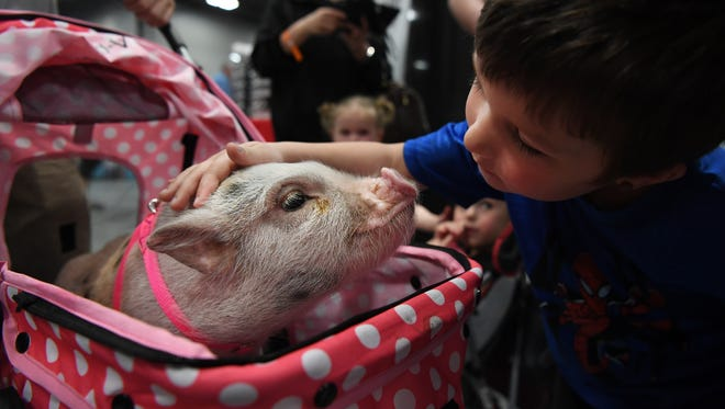 Super Pet Expo at the NJ Convention & Exposition Center in Edison on Saturday, April 14, 2018. Landon Taynor, 5, pets Bonnie the pig.