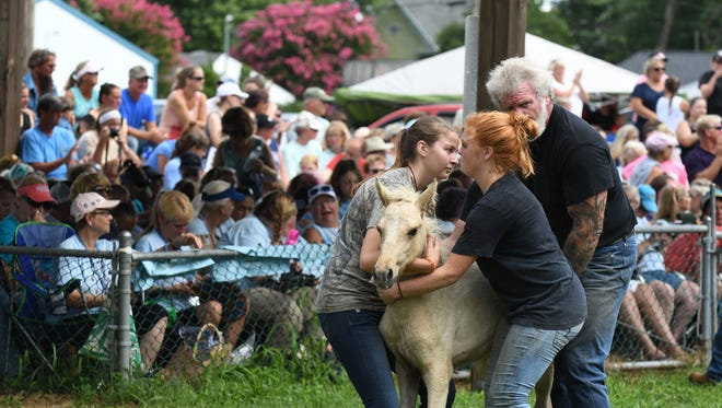 A group of volunteers hold a foal during the annual Chincoteague Volunteer Fire Company pony auction  on Thursday, July 26, 2018. The ponies are sold to help fund the fire company and care for the ponies throughout the year.
