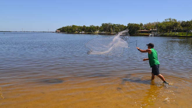 A fisherman throws his castnet into the lagoon east of US 1 where Turkey Creek meets the Indian River. The city of Palm Bay is proposing a new 300-400 foot public pier -- possibly longer -- with boat docks to be located east of US 1 at the entrance to Turkey Creek.