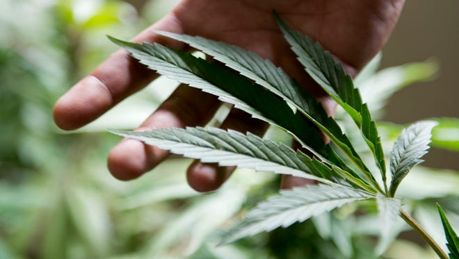 So many varieties, so many questions. We have the answers for new marijuana users.