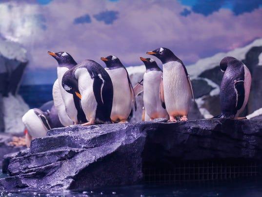 636489350883771659-penguins6.jpg