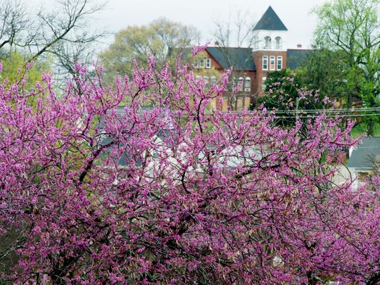 Knoxville College is seen behind a blooming redbud